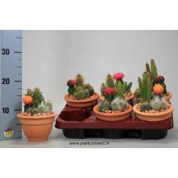 Cactus 952 4p-h25-p13-tc