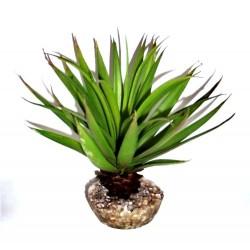 Succulente verte LABEO