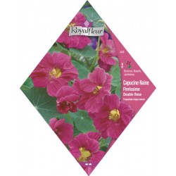 Capucine florissimo n.dbl rose