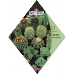 Cactee & plante grasse
