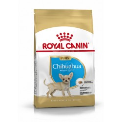 Chihuahua junior breed...