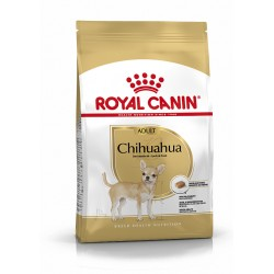 Chihuahua Adult breed...